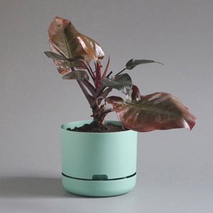 Selfwatering Plant Pot by Mr Kitly x Decor
