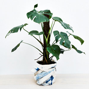 A plant from The Plantarum