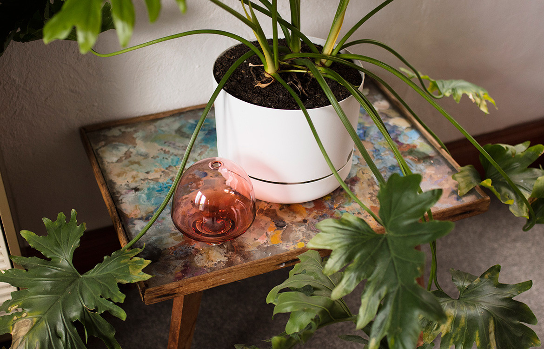 Anna Ross Kester Black CC Benjamin Hosking details plant pot