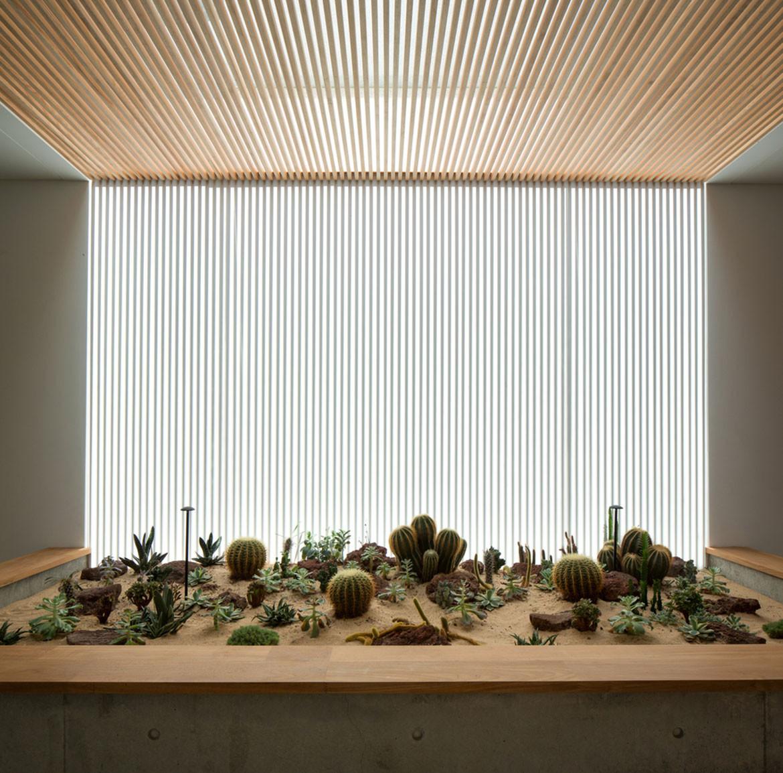 Hikari House Pranala Architects cc Mario Wibowo cactus garden