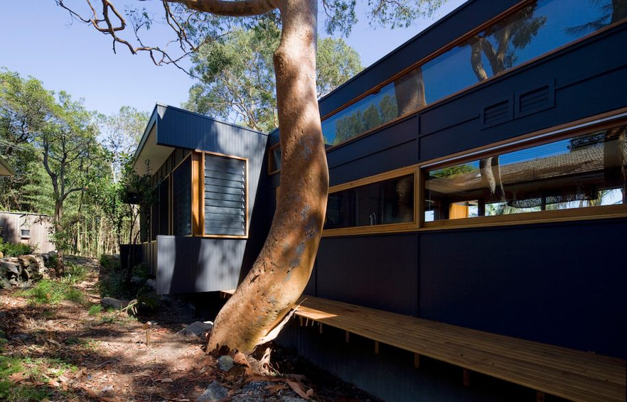 Ozone-HouseMatt-Elkan-ArchitectTreeHouse_treetrunk