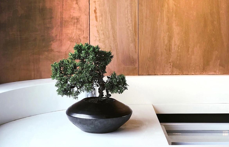 Yu TeaHouse HongKong StudioAdjective CC DickLiu bonsai