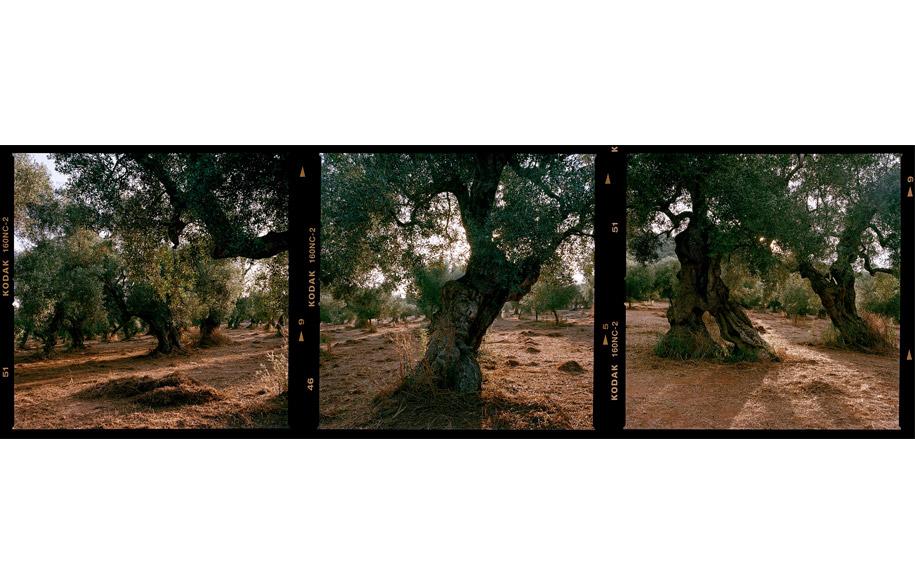 grove_5