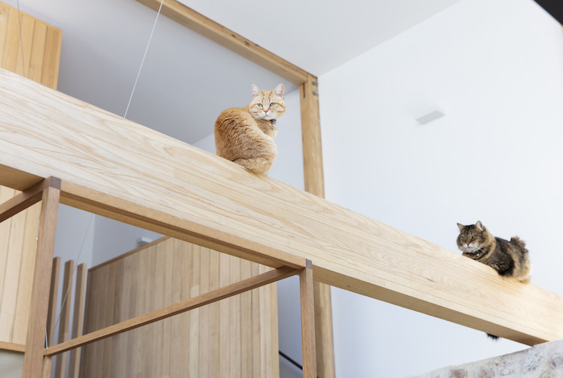 Cats sit on the timber frame rafters in the kitchen of Orient Street House.