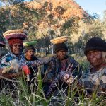 Tjanpi Desert Weavers Photography by Rhett Hammerton Artists from Kaltukatjara
